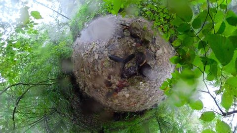 Rainy day in forest, Water drops falling on water stream. Mini planet concept.