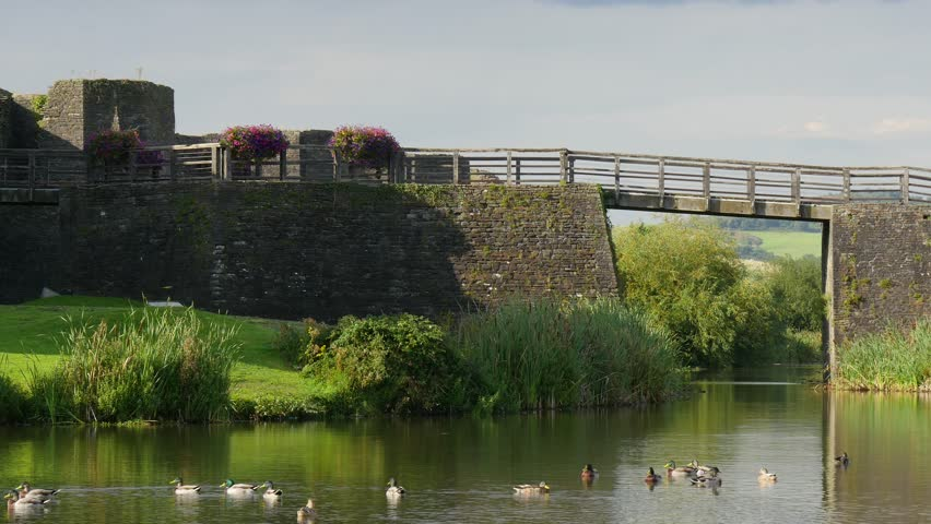 Ducks swim in the water surrounding Caerphilly Castle on a beautiful summer day.