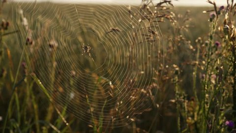 The spider sits on the web weaved by him in the field
