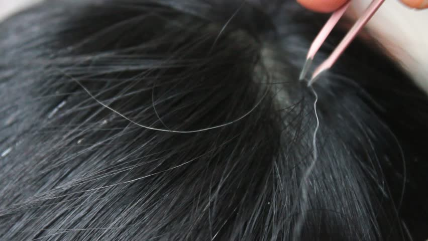 On the head of a woman There are many gray hairs. Then, using tweezers to pull out gray hair line. | Shutterstock HD Video #1016057788