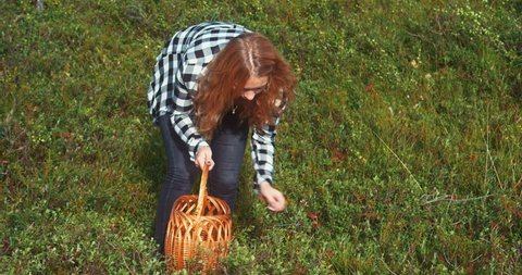 A woman in the forest collects berries in a basket.