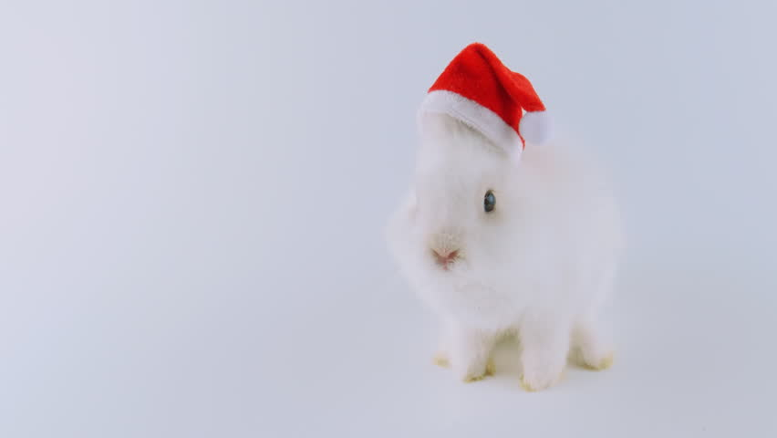 Cute white bunny in Santa's hat, singing a Christmas song, looped, isolated on white background, ProRes source codec, 422
