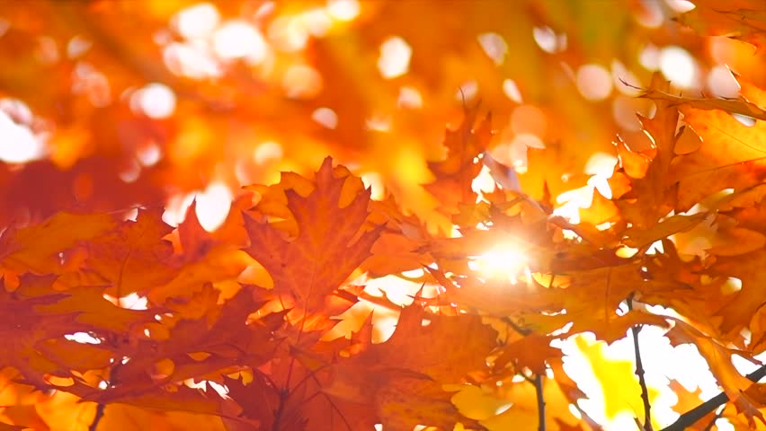 Autumn Leaves Nature Background Leaf Stock Footage Video 100 Royalty Free 1016363818 Shutterstock