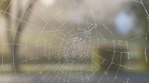 The dewdrops on a spiderweb at morning