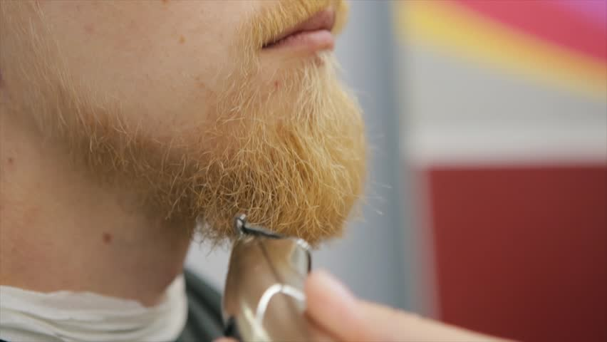 Trimming hairy blond bush using a electric shaver