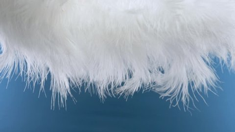 white cloud of feathers. macro close-up. Selective focus, blurred focus, abstraction. super slow motion. color background
