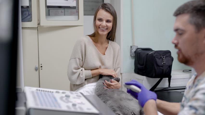 Vet doing ultrasonography for cat | Shutterstock HD Video #1016823028