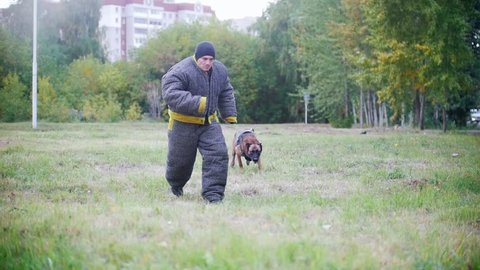 Man in a protective suit coaches his shepherd dog to attack. Running to camera