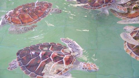 Green sea turtle Sea turtle thailand