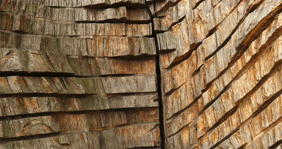 Abstract Wood Texture | Shutterstock HD Video #1017044398
