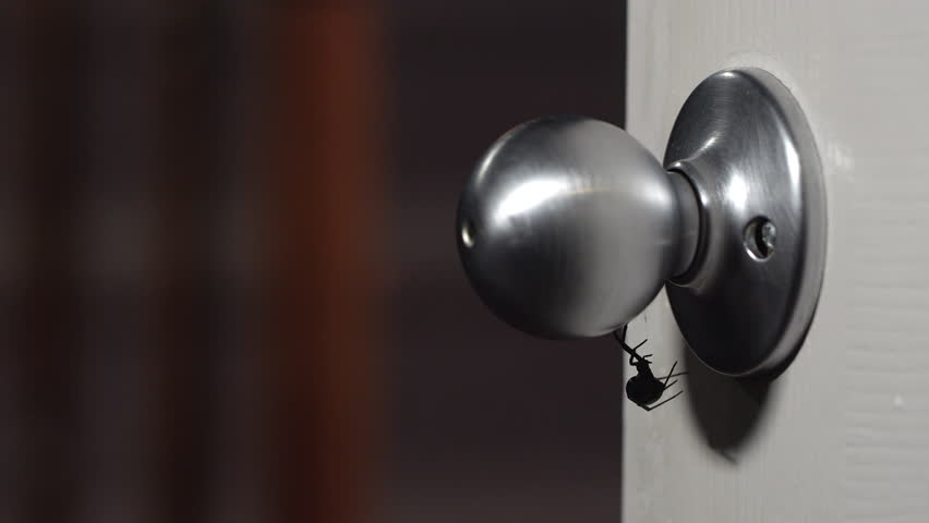 Black Widow Spider hanging on doorknob as person walks by.