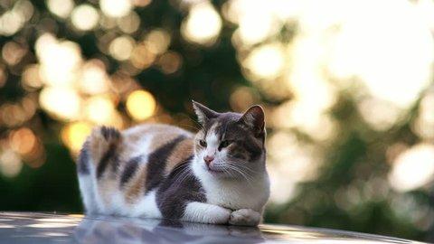 three legged cat and its friend