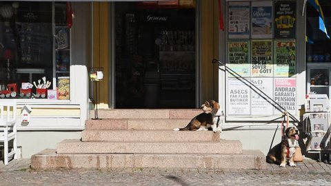 Granna, Sweden – July 2, 2018: Two elderly dogs sitting on the stairs outside a small shop while their handler exits the shop to untie them. An ordinary sunny summer morning.