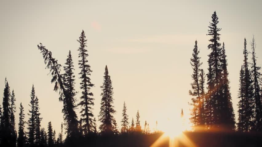 Yukon river, Yukon Territory, Alaska. Night camp of a canoe expedition to Alaska. Sun set between the trees on an artic afternoon.