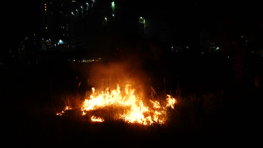Brush fire burning grass and palm trees at beach | Shutterstock HD Video #1017929398