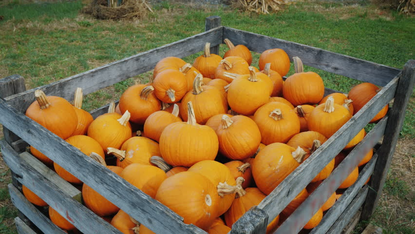 Large wooden box with pumpkins for Halloween sale   Shutterstock HD Video #1018151698