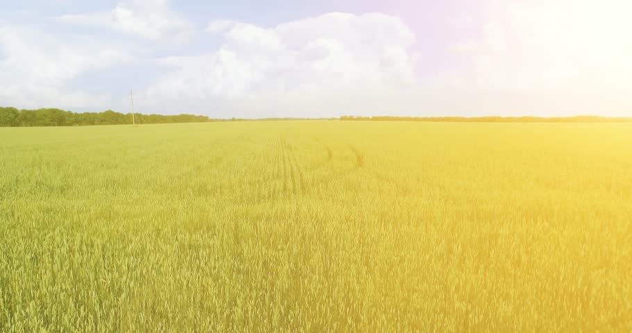 UHD 4K aerial view. Low flight over green and yellow wheat rural field at sunny summer day. Green trees and sun rays on horizon. Fast horizontal movement. | Shutterstock HD Video #1018195408