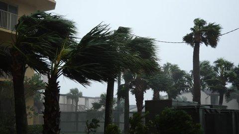Hurricane Michael Blows Palm Trees