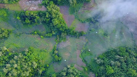 Drone shot straight down aerial jungle mountain forest and rice fields / Drone shot straight down aerial jungle mountain forest and rice fields with clouds in beautiful green Flores island