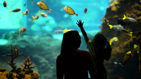 Silhouette Of Family. Daughter With Mother Excited To Watch The Dolphin Swimming Under Water In The Aquarium.