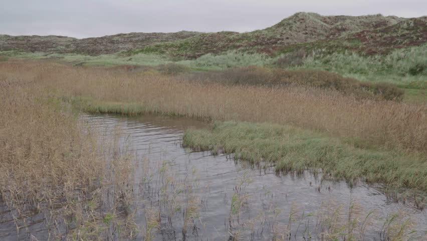 A lake in overgrown dunes in denmark | Shutterstock HD Video #1018780078
