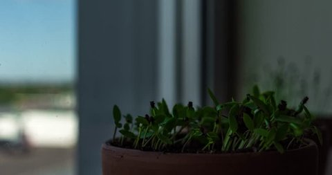 Time lapse video of pot plants