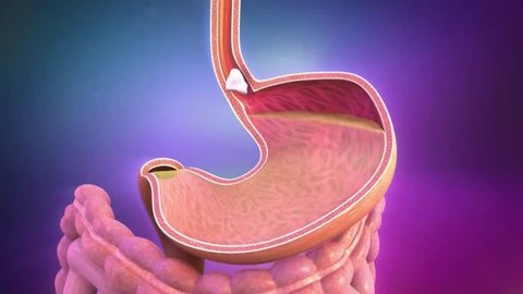 Food disintegration in the stomach. 3D animation