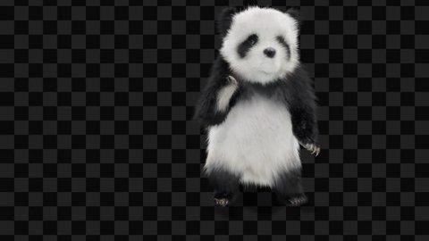 panda  CG fur 3d rendering animal realistic CGI VFX Animation  Loop alpha dance Dancing Twerk animals shadow