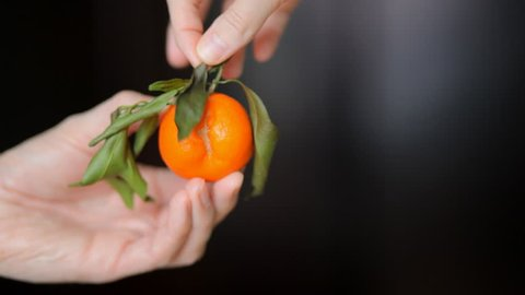 Sexy orange fruit in the right hands. Aphrodisiac. Visual aids and wildlife lesson. Ripe tangerine with green leaf in beautiful hands.
