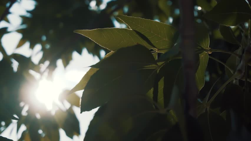 Light leaking through the trees | Shutterstock HD Video #1020778528