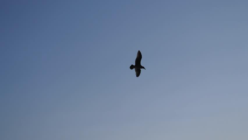Flying sea bird in the sky #1020988498