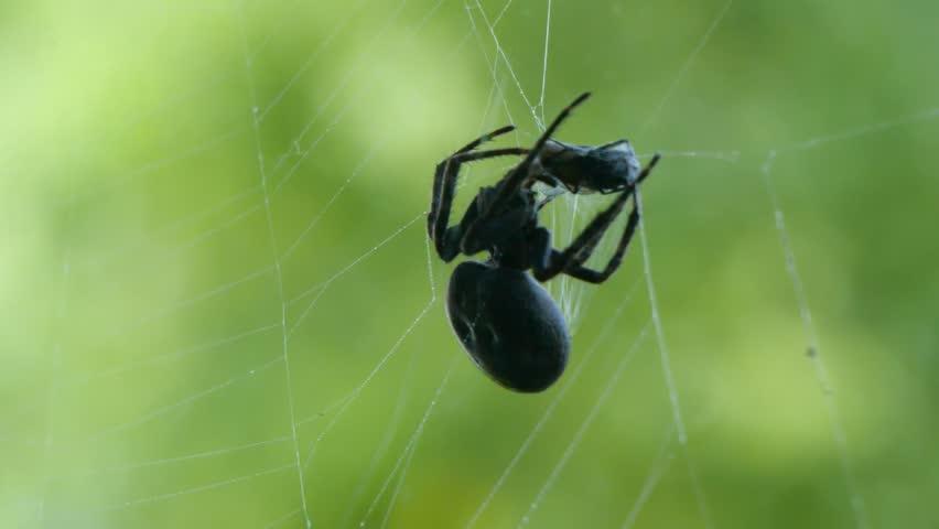 Rüyada Bahçede Siyah Tüylü Büyük Bir Örümcek Yakalamak Görmek