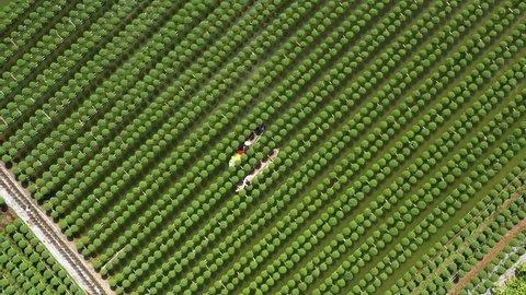 Top view Flowers farm at Sa Dec flower village, Sa Dec town, Dong Thap province, Vietnam.