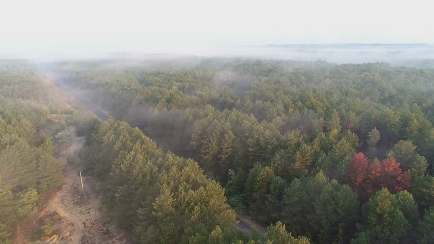 Aerial view of people running along the asphalt road between a forest with fog and sunrise. Concept: running, fitness, healthy lifestyle, well-being, marathon   Shutterstock HD Video #1021970728