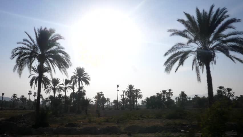 Slow motion shot of Date farming in front of sun in Pakistan | Shutterstock HD Video #1022276668