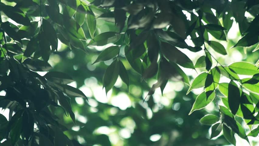Winter Sunbeams leaves | Shutterstock HD Video #1022451448