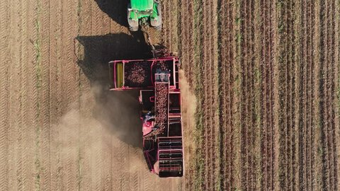 aerial footage farm equipment harvesting sugar beets. red combine harvesters harvest of sugar beet on ed combine harvesters harvest of sugar beet on farmland