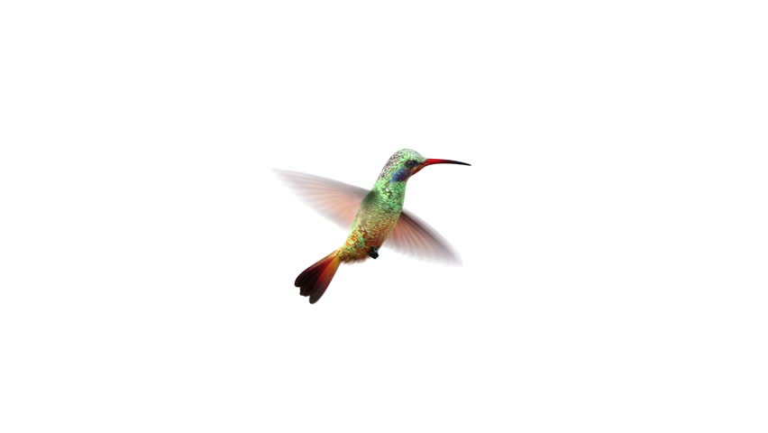 Humming Bird, Beautiful 3d animation #1022920018