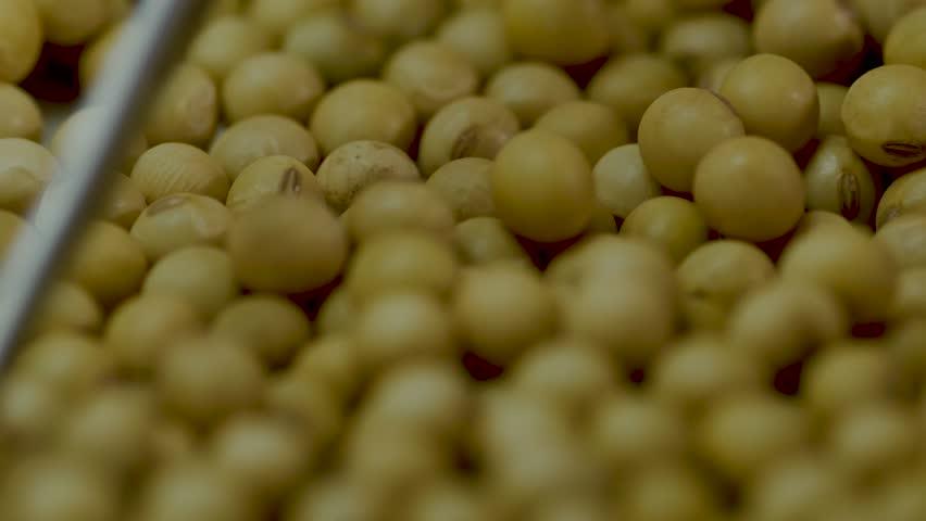 Soybean soy analyze choose   Shutterstock HD Video #1022941828