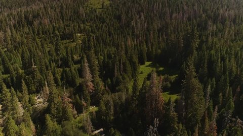 Aerial shot flying slowly over a lush green forest in the California Sierra mountains. Pans up to reveal the hill ahead. Grand landscape, clear skies.
