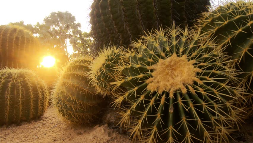 Close-up of Cactus plant, panning shot. | Shutterstock HD Video #1023124228
