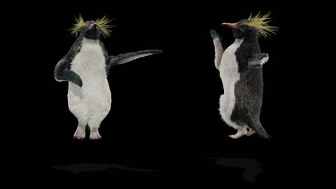 penguin CG fur 3d rendering animal realistic CGI VFX Animation  Loop alpha dance composition 3d mapping