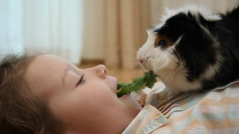 Funny little child girl with guinea pig pet lie and eat share one sprig of parsley together