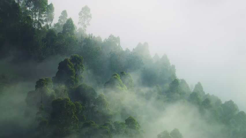Rubuguri, Uganda - January, 2018: A forest shrouded in a dense fog. | Shutterstock HD Video #1023774718