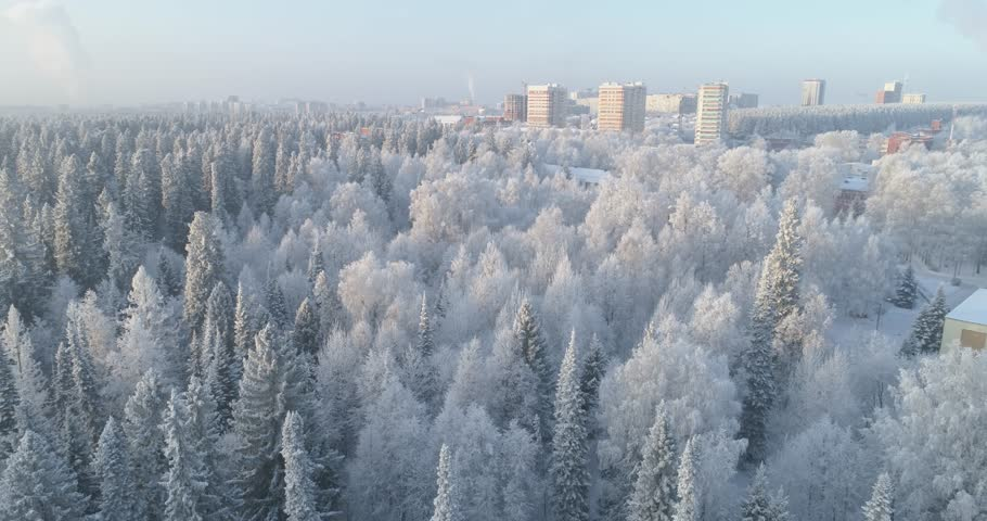 Aerial drone shot of a winter pines frozen forest