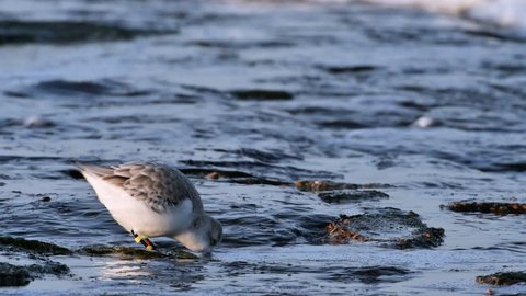 Bird Leg Band Stock Video Footage - 4K and HD Video Clips
