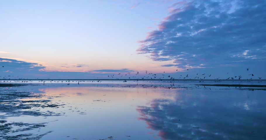 A flock of sea birds take to the colourful sky leaving the reflective water behind. Beach in The Hague, the Netherlands.