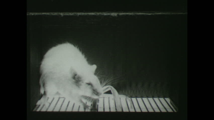 1940s: Rat Gets Electrocuted By Stock Footage Video (100% Royalty-free)  1024205108 | Shutterstock