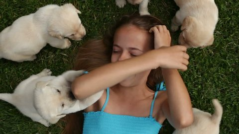 Happy girl lying in the grass laughing surrounded by her labrador retriever puppy dogs - top view