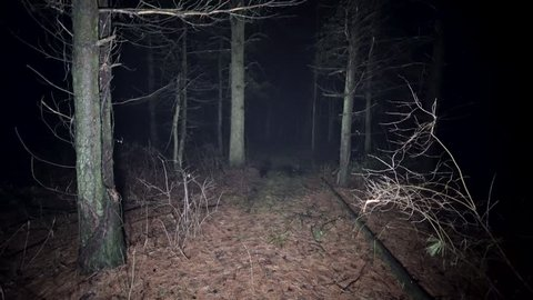 Lost and walking in scary nighttime woods. Running thorough misty deep forest at night. Scared running away from monsters and death, lost and alone in the dark. Spooky trees and fog in darkness.